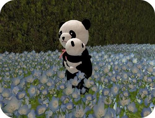 Tiny panda avatar