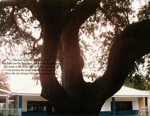 beth tree