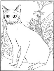 coloriage-chat-siamois-1_gif