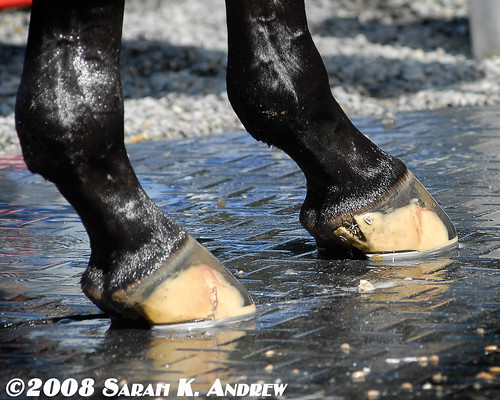 Big Brown's Feet- the most famous hooves in racing