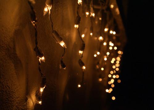 Fairy Lights 6/365