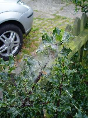 when we first arrived at Grans house it was very misty, and everything was wet as a result, including this spiderweb, which had housed spiderbabies *shudders*. the web is pretty though, with all its droplets of water. Autumn, anyone?