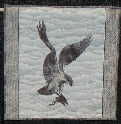 The Karearea - New Zealand Falcon by Judith Briant (New Zealand)