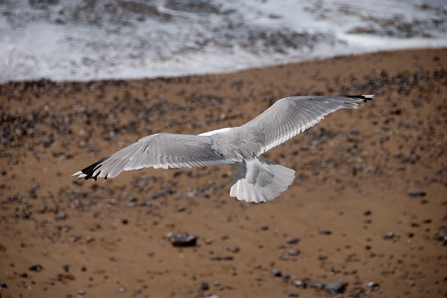 Seagul invading beach