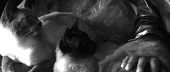 Catwoman 112_0002