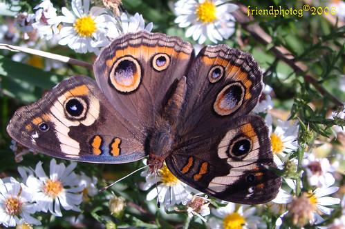 Butterfly 5 edit b - sig