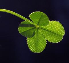 Hope - Faith - Love - Luck
