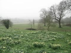 1066 field at Battle Abbey