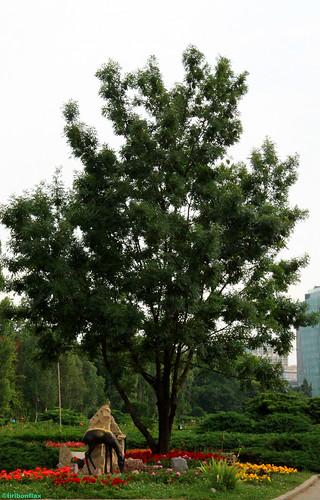 copac viu si natura moarta