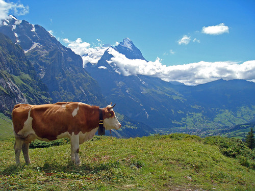 Swiss Alps - Eiger