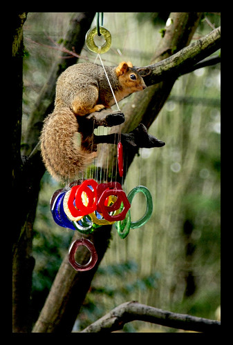 Crazy squirrel!!! On my windchime