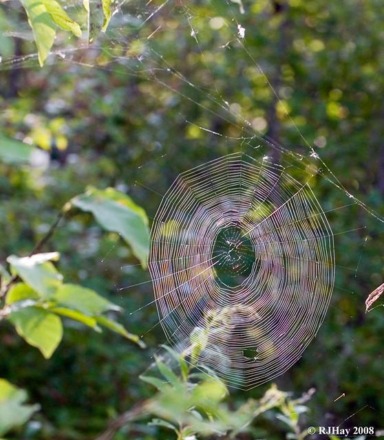Spider Web - Rondeau Provincial Park