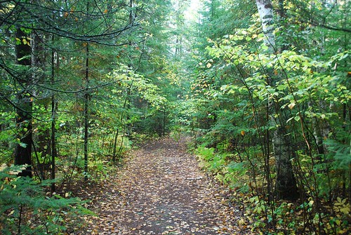 A wooded trail through the school forest