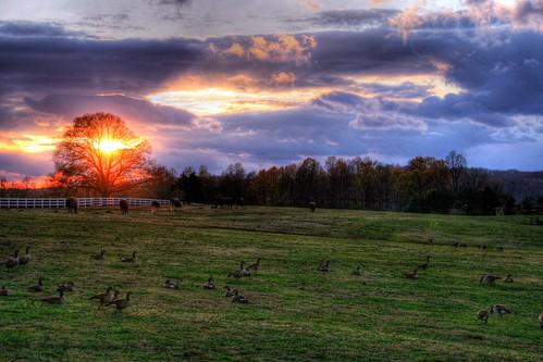 Pastureland Sunset