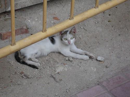 El gato tranquilo