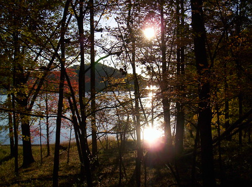 Twin sun, woods