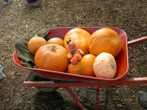 Pumpkinman and kin