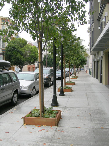 San Francisco street trees