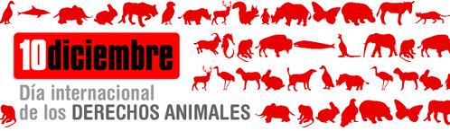 Dia Internacional Derechos de los Animales
