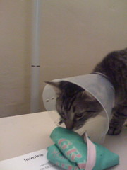 cone kitty