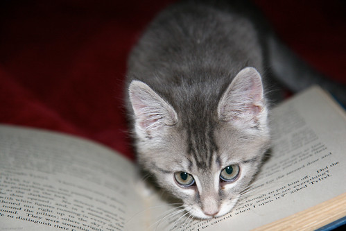 Pippi reads about Tyltyl...