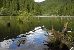 Gyilkos-tó, Transylvania