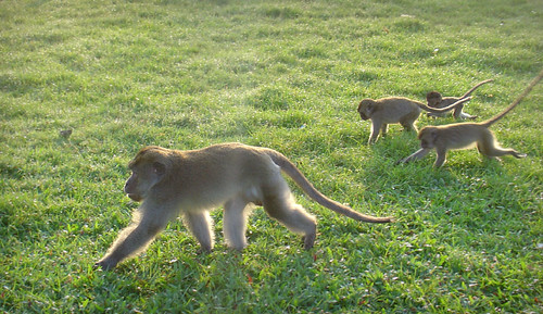 monkey patrol