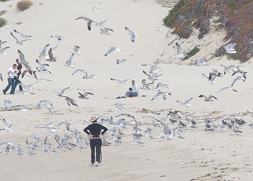 Gull flock by you.