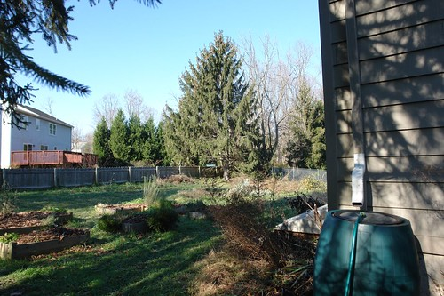Back garden sans willow