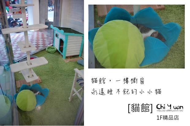 貓館04.jpg