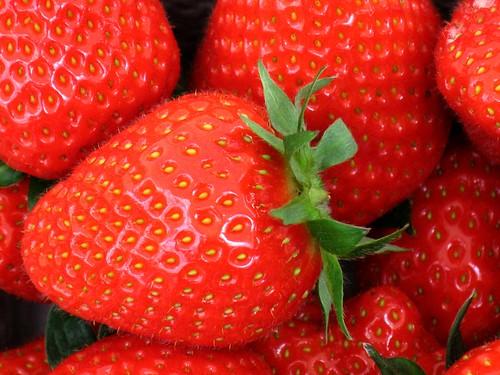 Strawberries fields forever