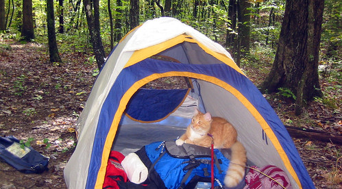 20080927 - camping - 169-6919 - Oranjello - hanging out in tent - please click through to leave a comment on FlickR