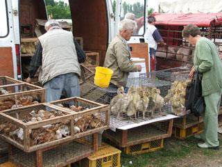 DSCF6028 dierenmarkt