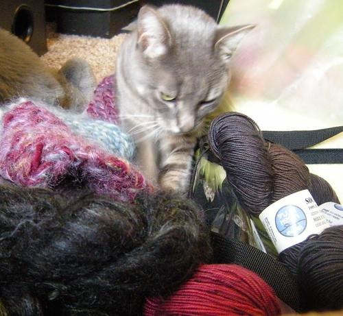 Dexter in the yarn pile