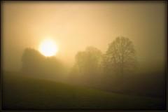nach-Hause - winter-fog