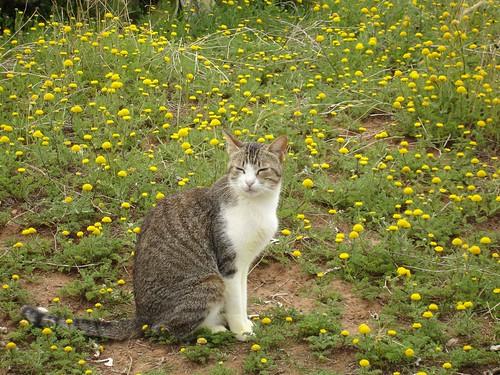 Un gato posando