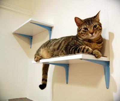 stu lounging on his shelf