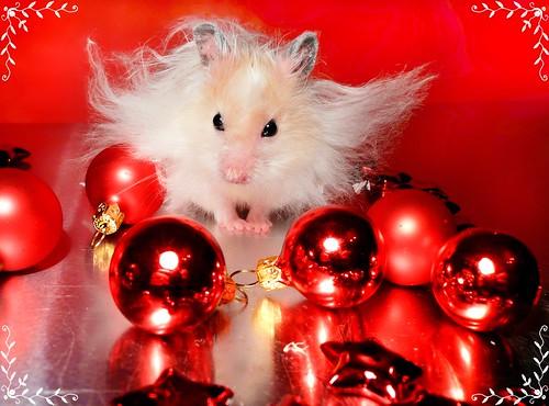 """Go away, stupid Christmas..."" ~ Piórko"