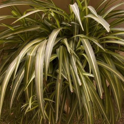 planta interior cinta15x15