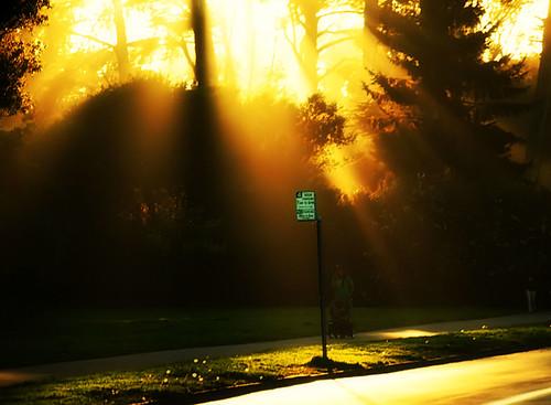 :: burning glory ::