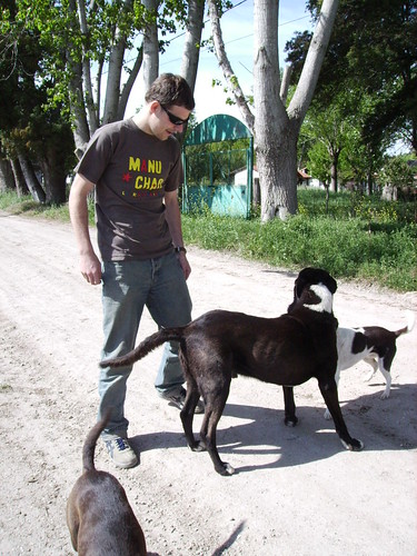 Perros del barrio
