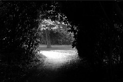 light behind dark tunnel of trees