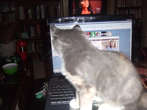 Kalli looks at Icanhascheezburger