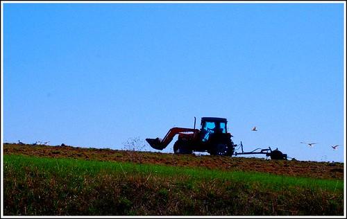 Tilling the soil.