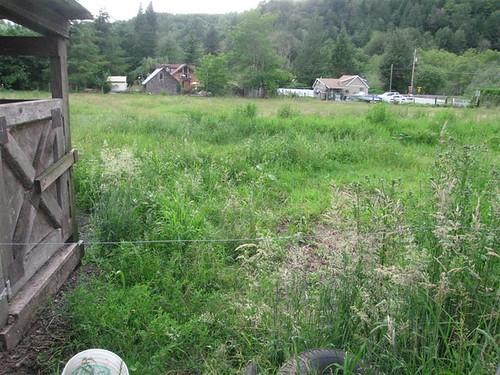 Front Pasture May 05 (Medium)