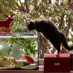 F = Fishtank (my moose, my fishes, my cat)