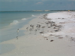 caledesi island, clearwater, florida