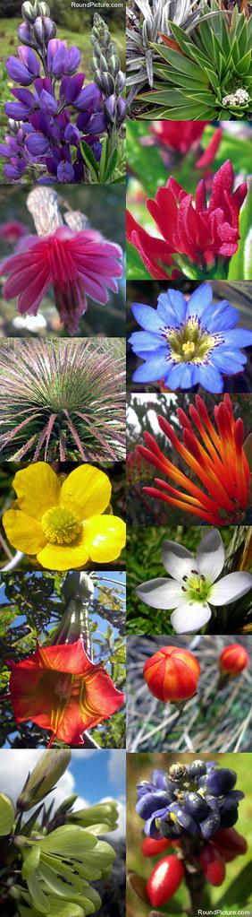 Ecuador - Parque Nacional Cajas - Wildflowers