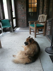 Reggie relaxing on the porch