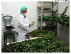 O Laboratório de Fitoterapia de Olinda produz medicamentos com plantas medicinais para atender a rede municipal de saúde. Foto: Passarinho/Pref.Olinda